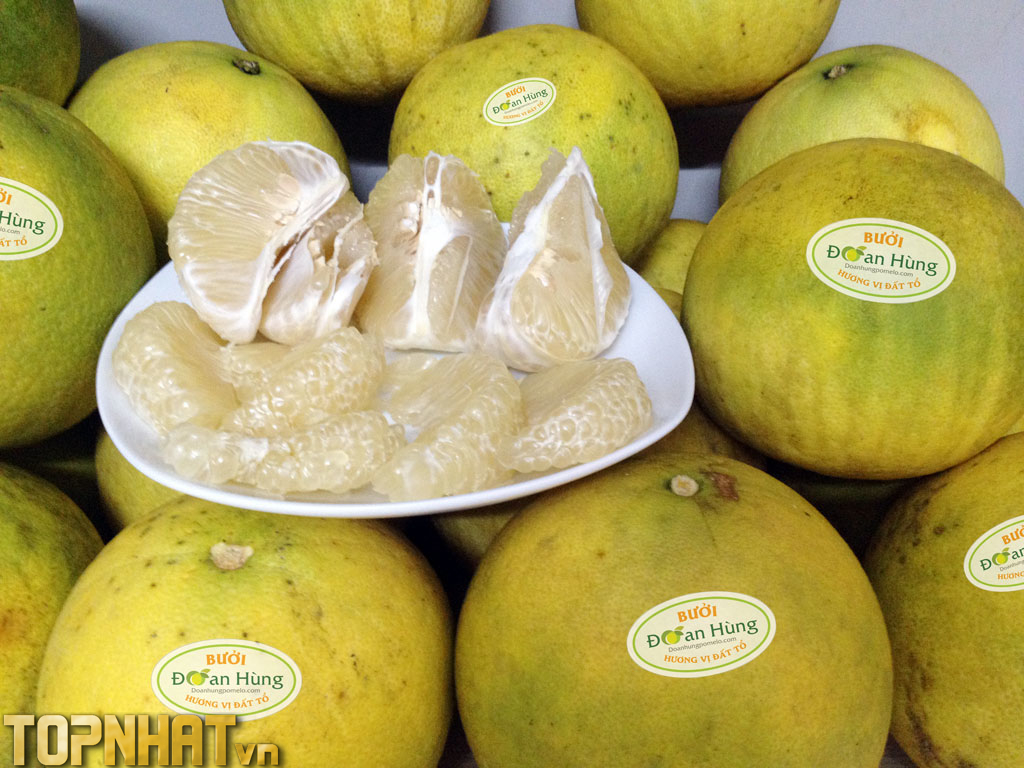 Bưởi Đoan Hùng - Loại trái cây đặc sản Phú Thọ