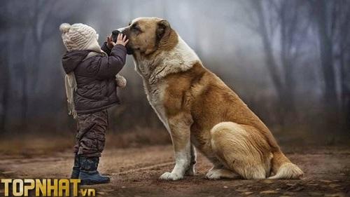 Chó được coi là loài thông minh và là loài trung thành nhất