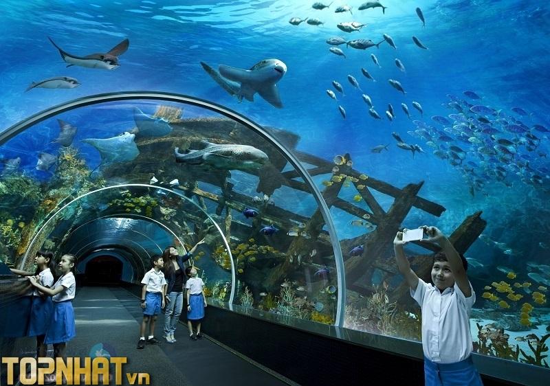 Thủy cung Times City là một trong những điểm đến được yêu thích tại Hà Nội